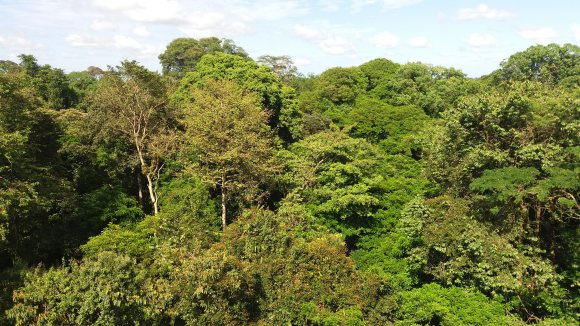 A Costa Rica-i dzsungel lombkorona szintből