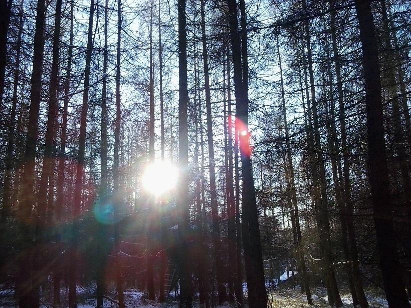 Saját képem a téli erdőből